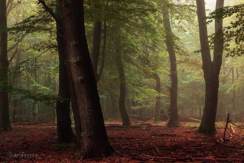 Woodland Warmth. -