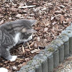 Grijs met muis (wat vooraf ging)-2