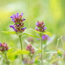 Wezen tuinieren met mijn camera :)