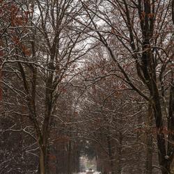 Winter in de Tevenerheide