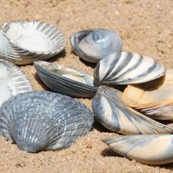 Zon, strand en schelpen