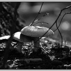 Natuur onder de bomen