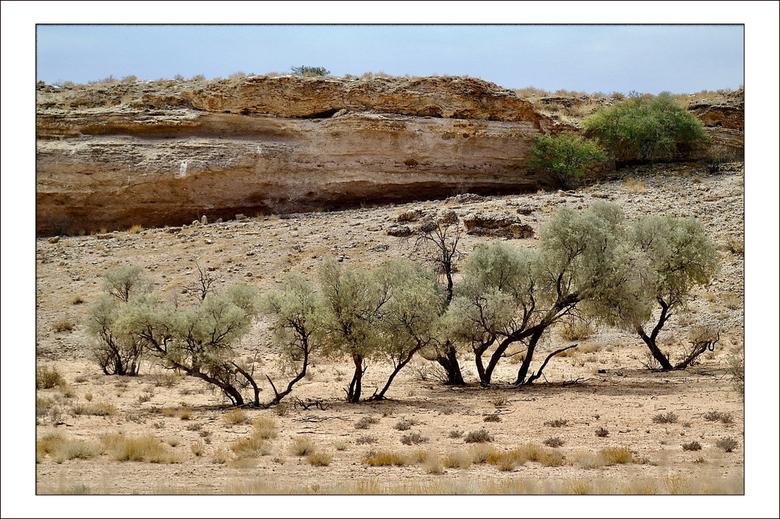 Kalahari - We vervolgen onze reis door het Kalahari transfrontierpark. We verblijven een aantal nachten op de camping in Twee Rivieren en maken van da