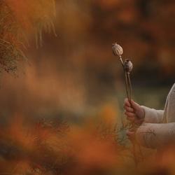 Herfst sfeerplaat met zaaddozen van klaproos