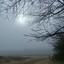 Mist in de duinen