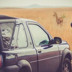 op safari in Holland