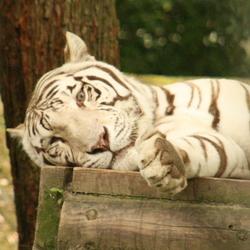 Teigetje, ouwehands dierenpark