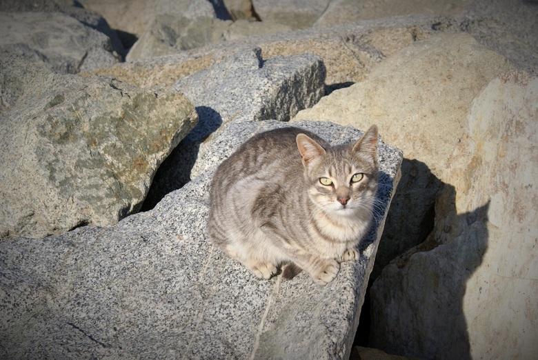 Barcelona strandkat - een kat op de rotsen aan het strand van Barcelona