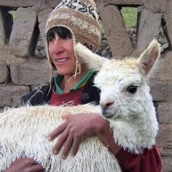 Peruaanse jongen met lama