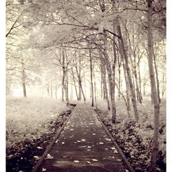 IR path