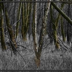 door het bos nog de bomen zien