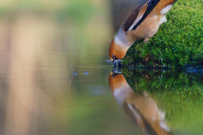 Ik zie dubbel - Prachtige vogels vind ik het en hier heb ik er twee voor de prijs van een.<br /> <br /> Iedereen die op mijn foto heeft gestemd bij