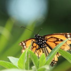 Monarch klaar voor de start
