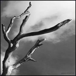 arbre zw