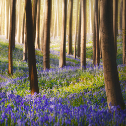 Bluebell lane