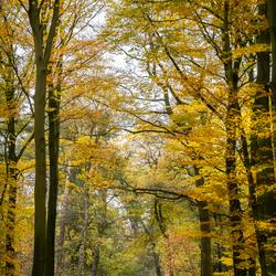 Het gele bos