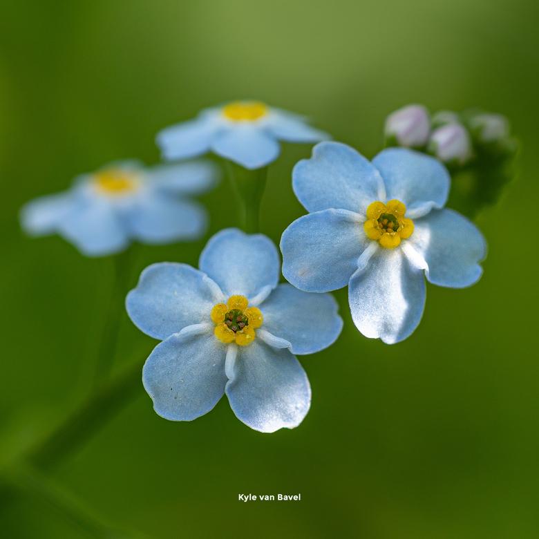 Cute little flower -