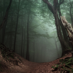 Forest Mystery.