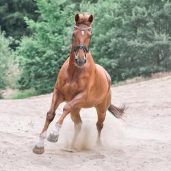 Paard in galop
