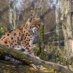 wildlife in de dierentuin