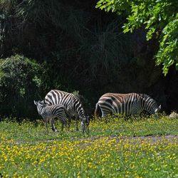 Parque de la Naturaleza Cabarceno #4