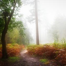 Herst en mist