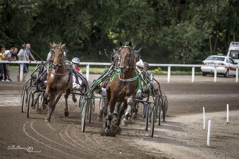 Full speed - Tijdens een paardenrace in het hippodroom van Tongeren