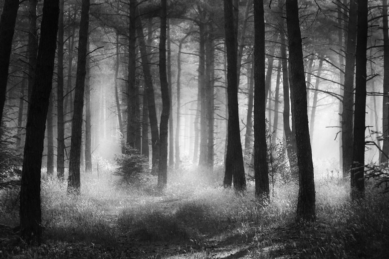 A forest -