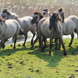Spanning in deze groep paarden