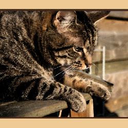 Jim as watercolor cat