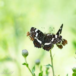 Vlinder carrousel