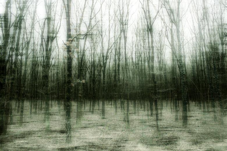 Is it deception what you see? - Een bos, water of een weerspiegeling?