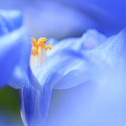 lenteblauw