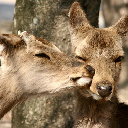Tender moments