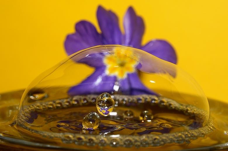 """Bloemendruppels &quot;Caught in a Bubble&quot; - Tijd voor een bloemendruppeltje <img  src=""""/images/smileys/smile.png""""/> Ik ben aan het experimenteren"""