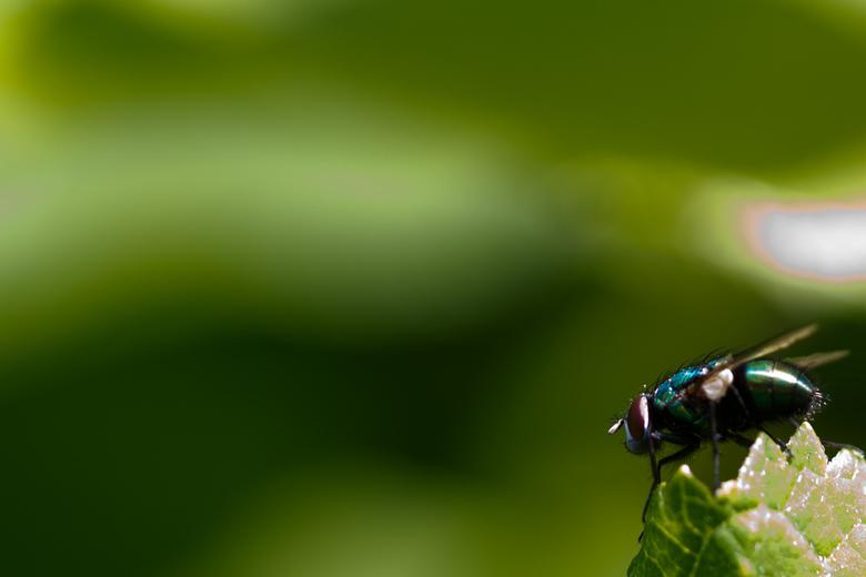 Sunny Fly - Mooie vlieg in het zonnetje!
