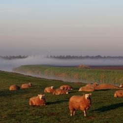 Mist voor Steenwijk
