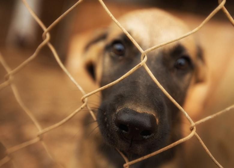 In opleiding: bange waakhond - Alles deed dit puppy voor aandacht, hij klom zelfs bij het gaas omhoog. Zijn grote voorbeeld draaft de hele dag heen en