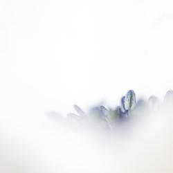 Anemoon in de wolken