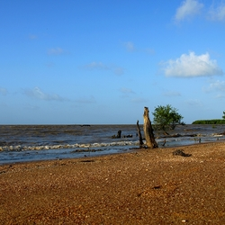 Coast of Suriname
