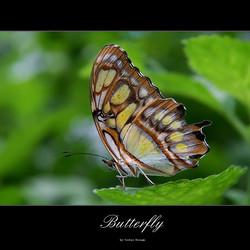 Butterfly - San Antonio Zoo