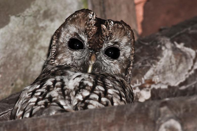 Grote ogen - Prachtig om door 2 van die grote ogen aangekeken te worden terwijl je een oude verlaten schuur in loopt