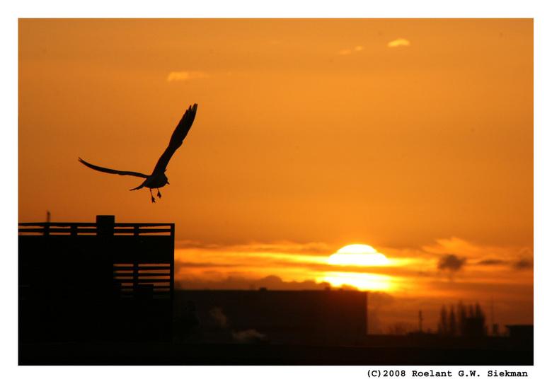 """Morgenvlucht - Een paar dagen geleden de zon nog gezien.. <img  src=""""/images/smileys/smile.png""""/><br /> En de meeuw waarvan het silhouet wilde nemen"""