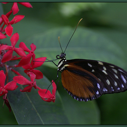 Vlinder op plant!