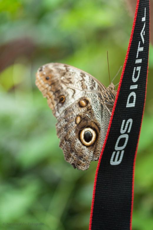 """Butterfly loves Canon - Deze vlinder heeft een uitstekende keuze gemaakt. """"Canon"""""""