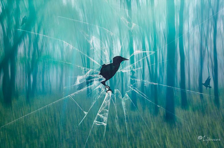 The Raven - ....