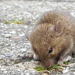 dit muisje heeft een...!