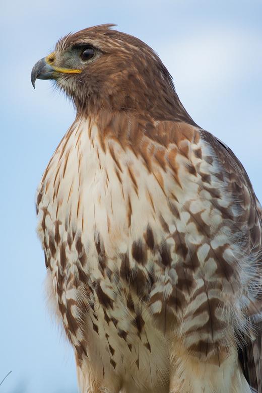 Wat zie ik daar... - Een foto van roofvogelworkshop 2010 te Berkel Rodenrijs <br /> <br /> Ben benieuwd wat jullie zoomers ervan vinden.<br /> <br
