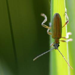 Bug on grass