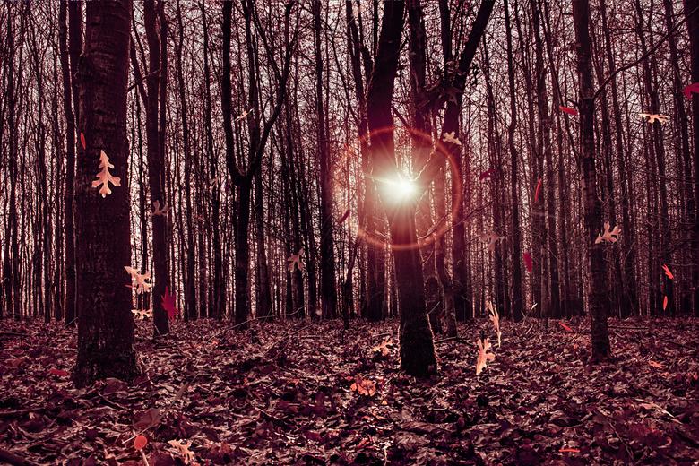Autumn glow -